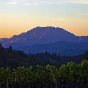terra-valentine-wines-1b