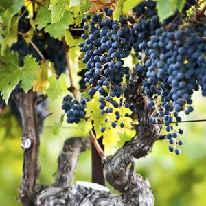 terra-valentine-wines-1d